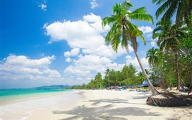 Preview wallpaper Palm trees, resort, beach, tropical, sea, people, summer