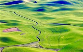 Preview wallpaper Palouse, beautiful green fields, Washington, USA