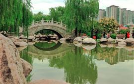 Parque, lagoa, ponte, pedras, salgueiro, cidade