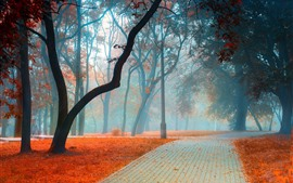 Parque, árvores, nevoeiro, estrada, folhas, manhã