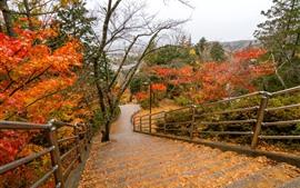 Parc, arbres, marches, haut, automne