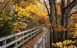 Preview wallpaper Park, wood bridge, trees, yellow and red leaves, autumn