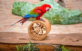 Preview wallpaper Parrot play a wheel