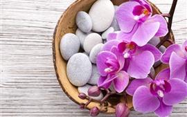 Phalaenopsis, flores rosas, piedras, cesta
