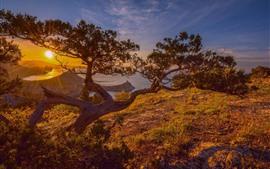 Pine tree, lake, sunrise, dawn