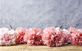 Flores de clavel rosa, gotas de agua.
