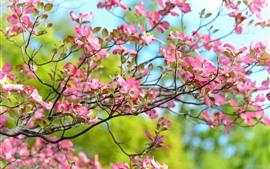 Flores rosas florecen, ramitas, primavera.