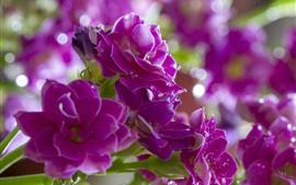 Flores cor de rosa, buquê, gotas de água, nebulosas