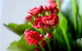 Preview wallpaper Pink flowers, green leaves, hazy