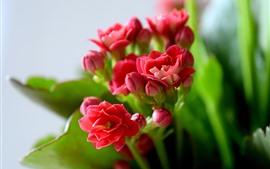 Flores cor de rosa, folhas verdes, nebulosas