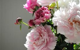 Aperçu fond d'écran Fleurs de pivoine rose, fond gris