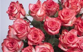 미리보기 배경 화면 핑크 장미, 꽃다발, 일부 꽃