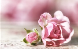 Preview wallpaper Pink roses, flower bud, bright