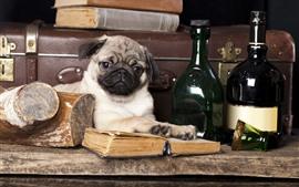 Puppy, book, wine