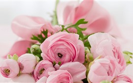 Preview wallpaper Ranunculus, pink flowers, hazy
