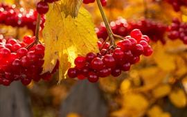 Красные ягоды, осень