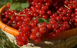 Preview wallpaper Red currants, basket
