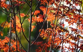 Preview wallpaper Red leaves, trees, twigs, autumn