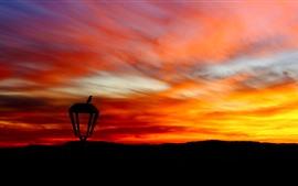 Красное небо, закат, птица, лампа, силуэт
