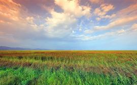 Cañas, cielo, nubes, paisaje natural.