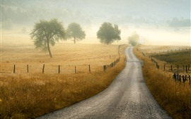 Road, fence, grass, trees, fog, morning