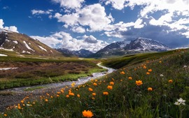 Preview wallpaper Russia, Altay, mountains, river, clouds, wildflowers