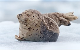 Preview wallpaper Seal cub rest, snow