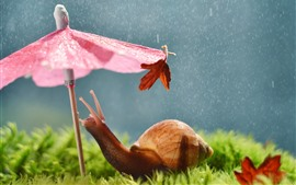 Snail, umbrella, rain, funny animal