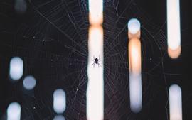 Aranha e teia, inseto
