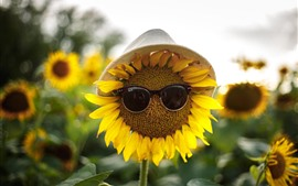 Sunflowers, sunglass, hat, funny picture