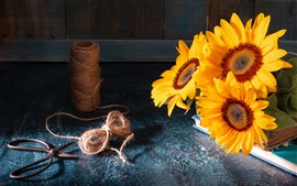 Preview wallpaper Sunflowers, twine, scissors