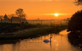 Preview wallpaper Sunrise, countryside, river, swan, morning, fog