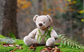 Preview wallpaper Teddy bear, toy, fern leaves