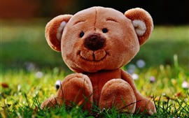 Preview wallpaper Teddy bear, toy, meadow