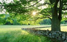 Árvore, folhas verdes, grama, pedras, raios de sol, verão
