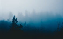 Trees, bushes, fog, morning
