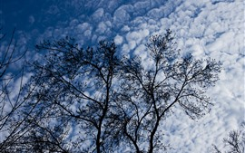 Trees, clouds, sky
