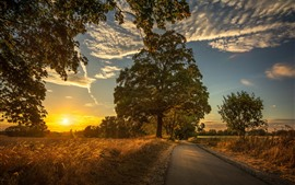 Trees, fields, morning, road, sunshine, clouds