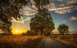 Arbres, champs, matin, route, soleil, nuages