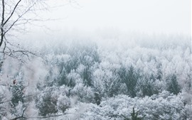 Árboles, escarcha, invierno, nieve, niebla.