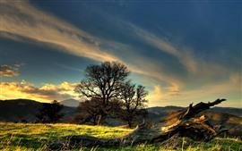 Árvores, grama, nuvens, céu
