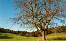 Árboles, pradera, otoño