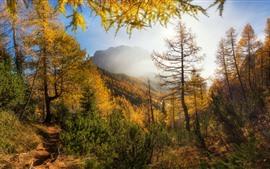 Arbres, montagnes, soleil, automne