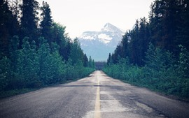 Árboles, camino, montaña, camino.