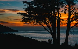 Preview wallpaper Trees, sea, sunset, silhouette