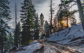 Árboles, nieve, invierno, camino, rayos de sol.
