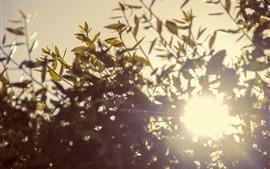 Веточки, листья, солнце, блики
