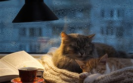 Two cats sleeping, window, water droplets, book, coffee