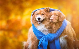 Two dogs, friends, blue scarf
