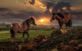 Preview wallpaper Two horses, sunset